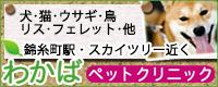 わかばペットクリニック犬猫小動物病院墨田区